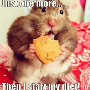 Hamster diet